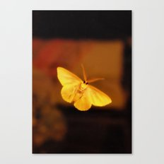 Creature of the night Canvas Print
