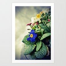 The Flower Pot Art Print