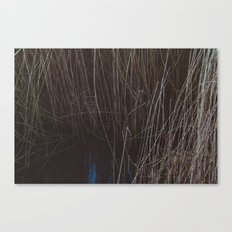 WATER THOUGH REEDS Canvas Print