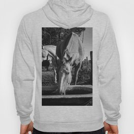Pampa's Horse Drinking Water Hoody