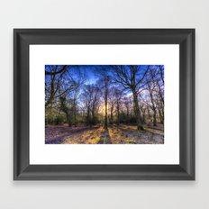 The Morning Sun Forest Framed Art Print