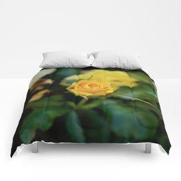 Intuitive Love Comforters