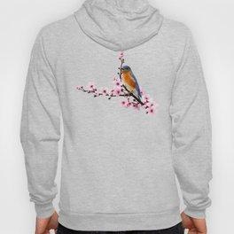 Eastern Bluebird and Cherry Blossom Hoody