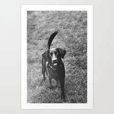 Dog 1 Art Print
