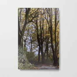 Autum Beeches, Blackdown Hills Metal Print