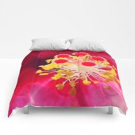 LITTLE DETAILS Comforters