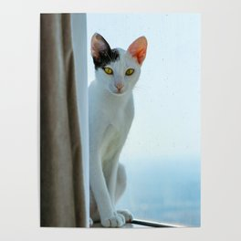 Cat By A Window Poster