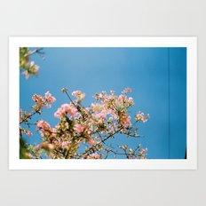 Flowers on blue Art Print