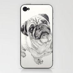 Seymour the Pug iPhone & iPod Skin