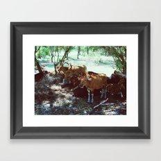 Gili Cows Framed Art Print