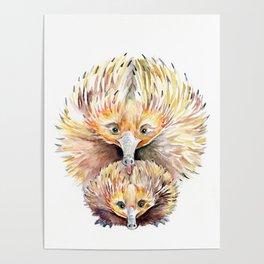 Enigmatic Echidnas Poster