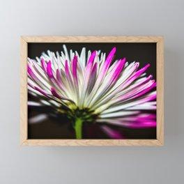 Chrysanthemum Framed Mini Art Print