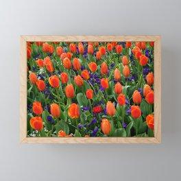 Tulip Field 2 Framed Mini Art Print