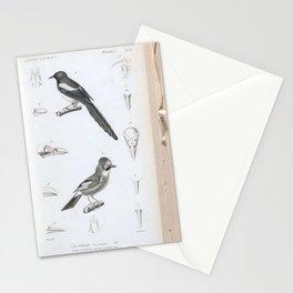 079 pica communis Eurasian Jay garrulus glandarius6 Stationery Cards