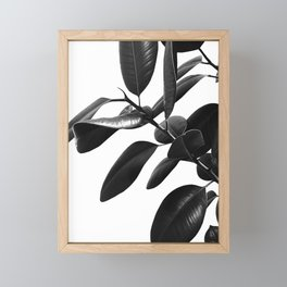Ficus Elastica Black & White Vibes #1 #foliage #decor #art #society6 Framed Mini Art Print