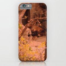 Yoghi Slim Case iPhone 6s