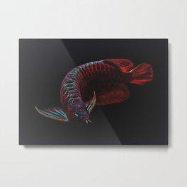 Arowana Super Red Metal Print