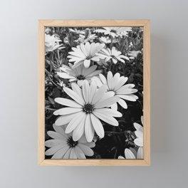 Daisy garden in black and white Framed Mini Art Print