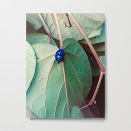 Cotton Harlequin Bug III Metal Print