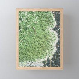 Fungi Forage #7 Framed Mini Art Print
