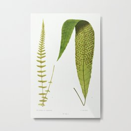 Polypodium Gracilis and P. Repens from Ferns British and Exotic (1856-1860) by Edward Joseph Lowe. Metal Print