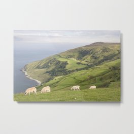 Sheep on Torr Head, County Antrim, Northern Ireland Metal Print