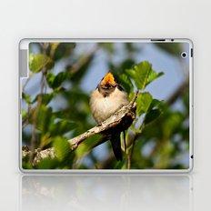 Singing swallow Laptop & iPad Skin
