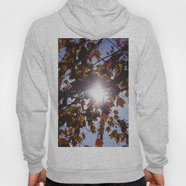 Autumn Sun Hoody