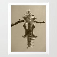 armadillo bones III Art Print