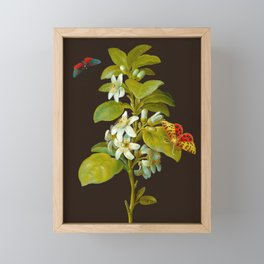 Elisabeth Christina Matthes - Botanical Floral Insect Illustration Framed Mini Art Print