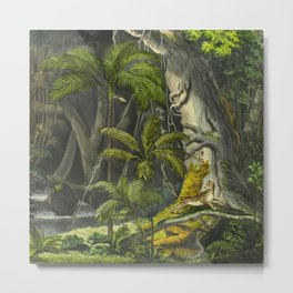 Nature Forest Tropical Trees - Carl Friedrich Philipp von Martius - c.1836-1850 Metal Print