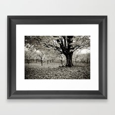 Wind and Leaves - B&W Framed Art Print