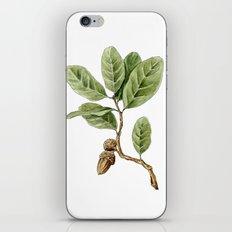 Live Oak iPhone & iPod Skin