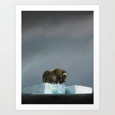 Muskox Chillin' on an Iceberg Art Print