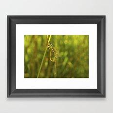 Shapes Of Nature Framed Art Print