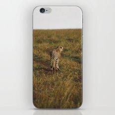 Cheetah Trail iPhone & iPod Skin