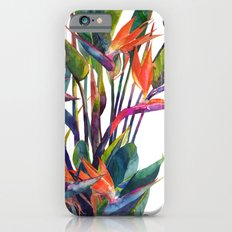 The bird of paradise iPhone 6 Slim Case