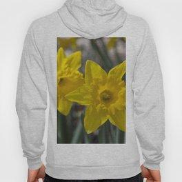 Daffodils 1 Hoody