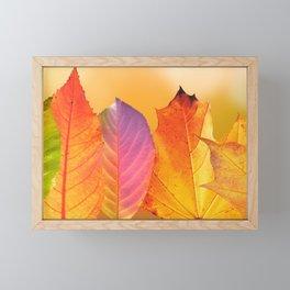 Autumn Leaves Colorful Modern Fine Art Photography Framed Mini Art Print
