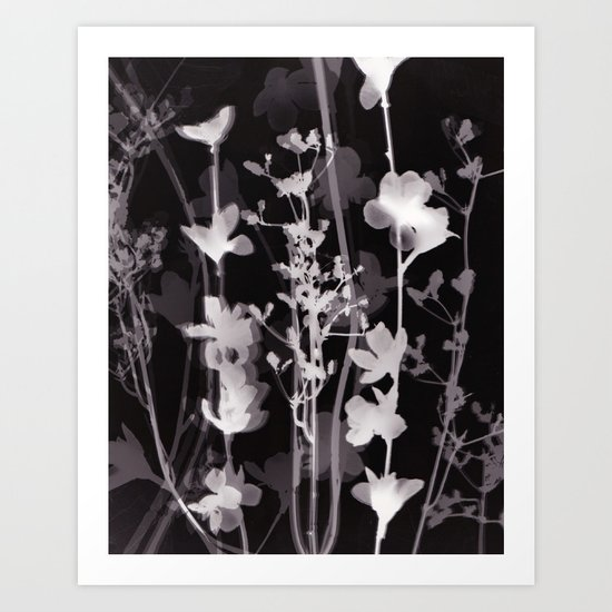 Flower Photogram #2 Art Print