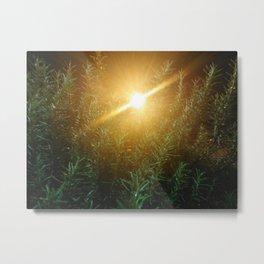 Rosemary Sunrise Metal Print