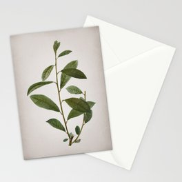 Vintage Grey Willow Botanical on Parchment Stationery Cards
