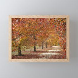 Sun Lit Tree Lined Avenue in Autumn Framed Mini Art Print