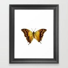 Butterfly #5 Framed Art Print