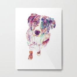 Multicolored Australian Shepherd red merle herding dog Metal Print