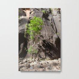 Pinyon Pine Tree (The Narrows, Zion National Park, Utah) Metal Print