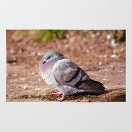 Concept nature : The watchful dove Rug