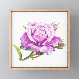 watercolour rose Framed Mini Art Print