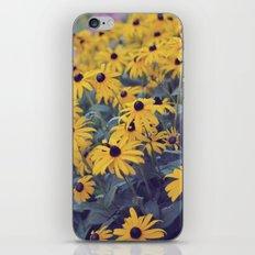 Rudbeckia iPhone & iPod Skin
