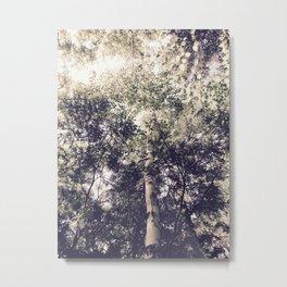 Dappled Light Filtered Through Trees Metal Print
